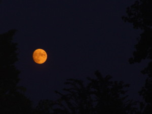 Strawberry Moon or Honey Moon by  npclark2k || morguefile